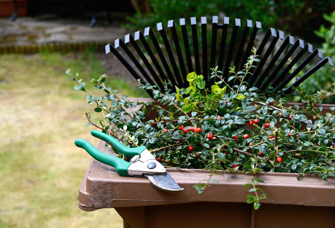 green waste bin shoalhaven